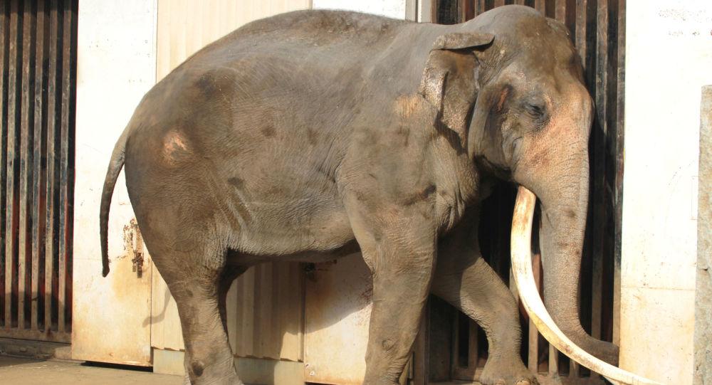 Slon v ZOO. Ilustrační foto