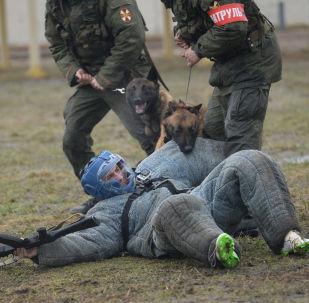 Trénink služebních psů Ruské národní gardy