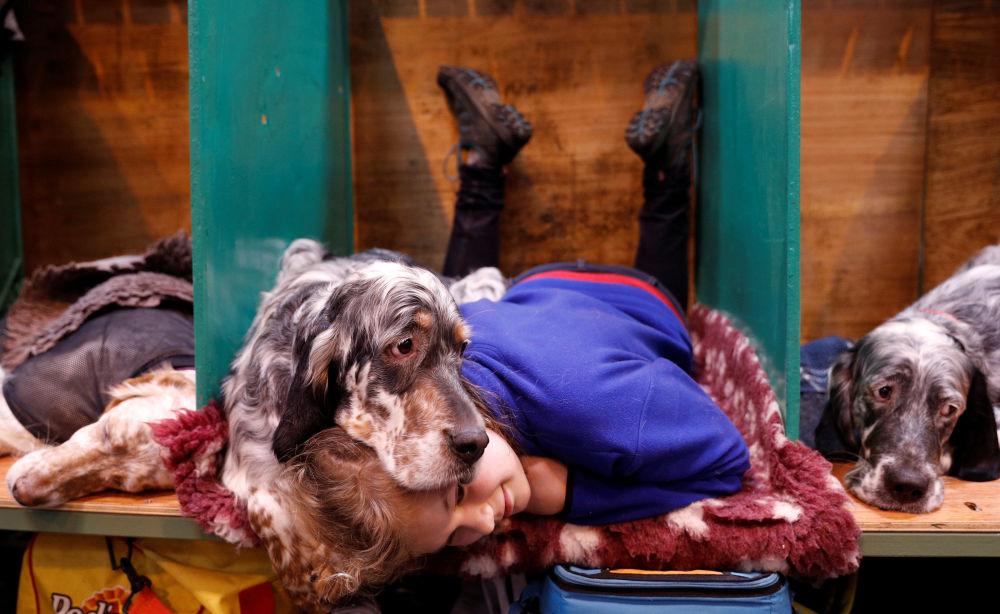 Majitelka a její anglický setr Topsy na výstavě Crufts Dog Show v Birminghamu, Velká Británie