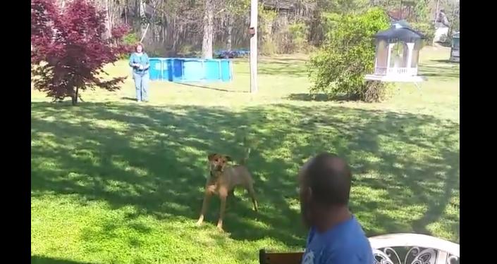 Pes nepoznal majitele, který značně zhubl