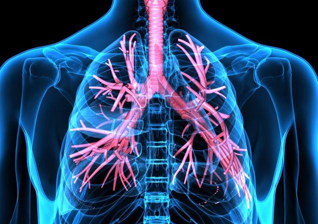 Dýchací ústrojí člověka