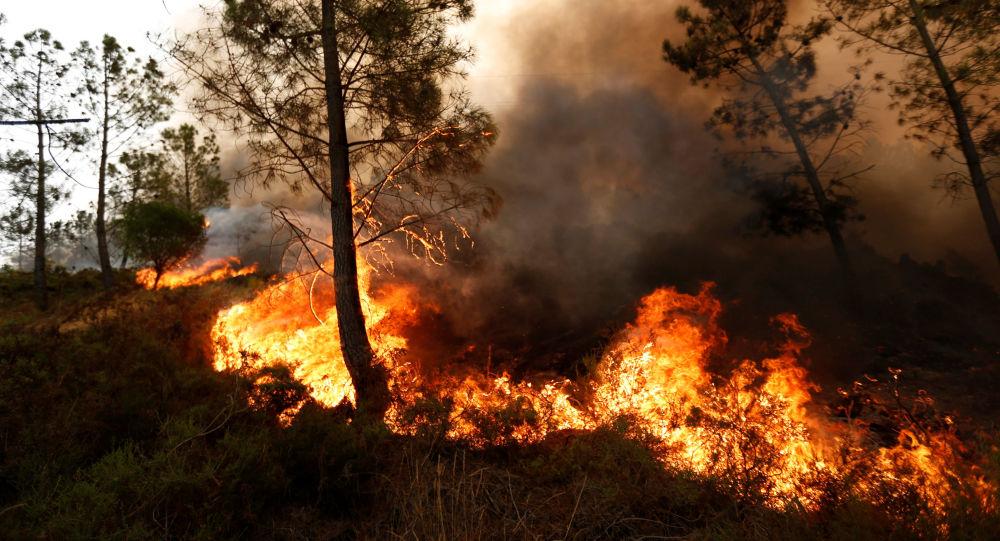 Lesní požár. Ilustrační foto