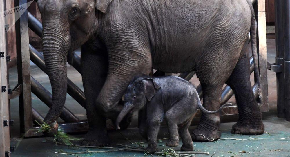 Novorozeně asijského slonu v Moskevské zoo. Ilustrační foto