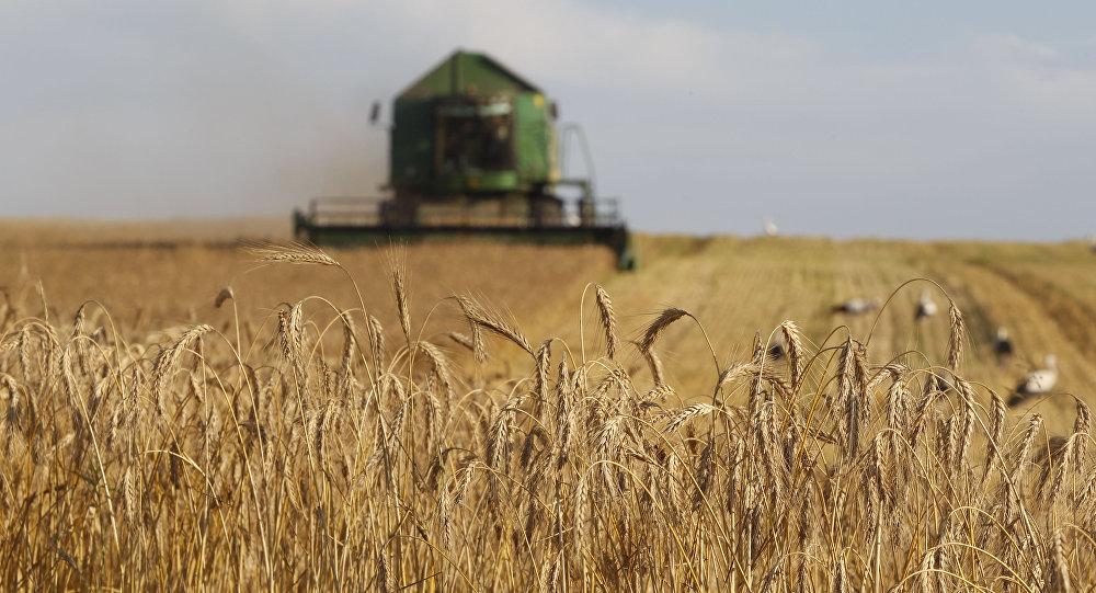 Ministr zemědělství: Rusko bude vždy sklízet nejmíň 100 milionů tun obilí ročně