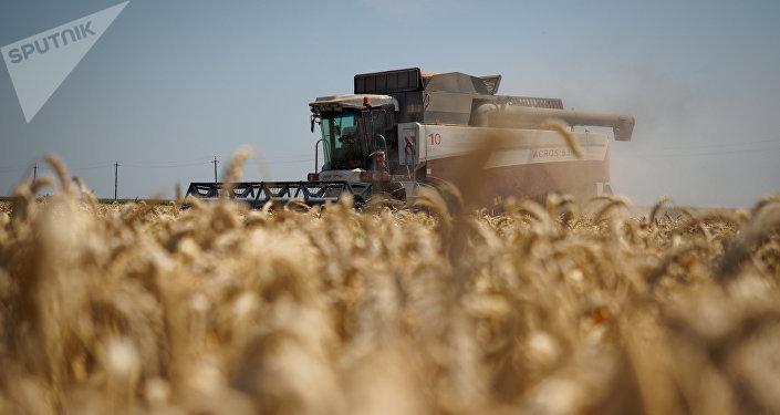 Sklízení úrody (ilustrační foto)