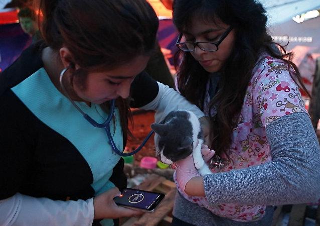 Na světě jsou dobří lidé: v Mexiku otevřeli útulek pro zvířata zraněná při zemětřesní