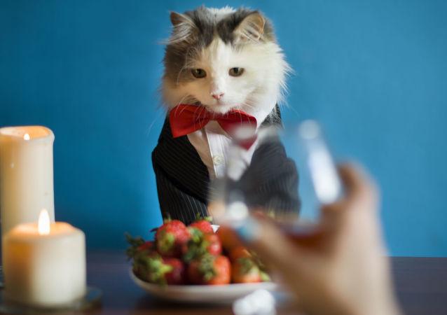 Žena večeří s kocourem