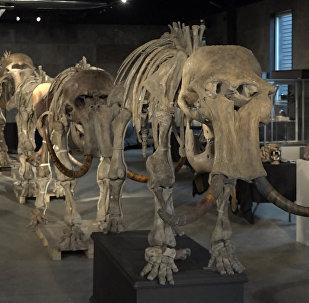 """Ve Velké Británii prodají """"rodinu"""" mamutů"""