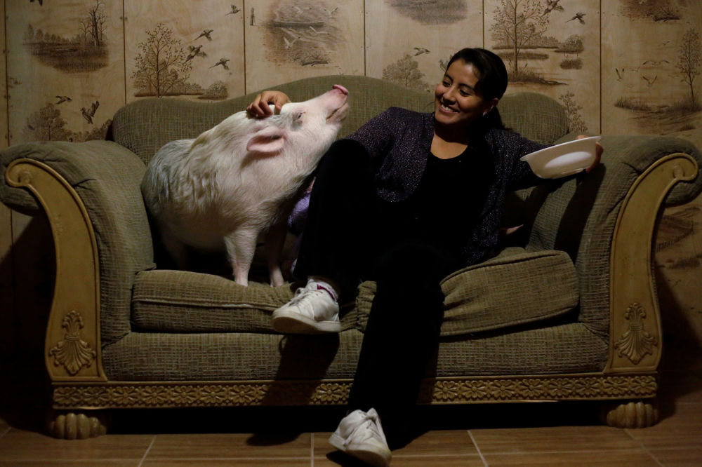 Yissel Mendoza a její prase Balu u sebe doma ve městě Ciudad Juarez, Mexiko