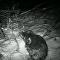 Co se ve skutečnosti děje v noci v lese?