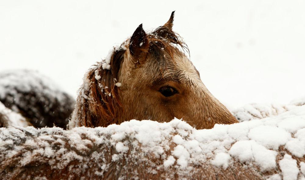 Zima je krásná: jak v různých zemích přežívají nejchladnější roční období