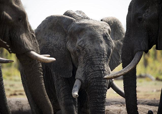 Sloni. Ilustrační foto