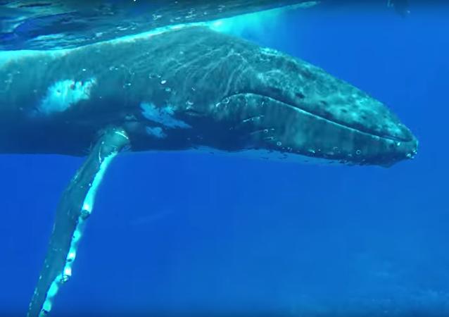 Keporkak zachránil ženu před žralokem