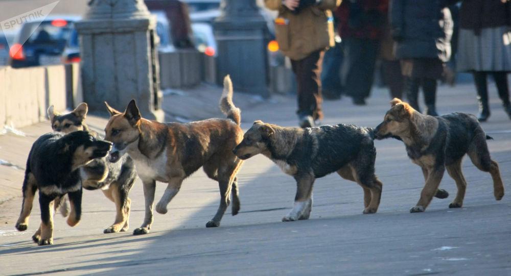 Psi na ulici v Moskvě