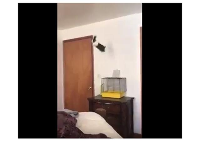 Králík vyskakuje z klece