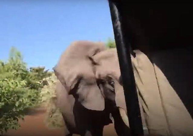 Útok rozzlobeného slona na auto s turisty se dostal na video