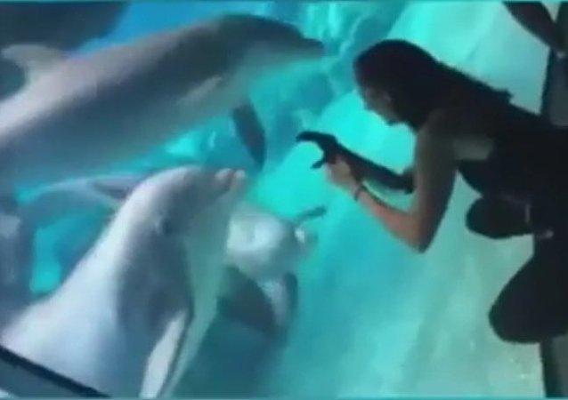 Delfín protéza Američanky