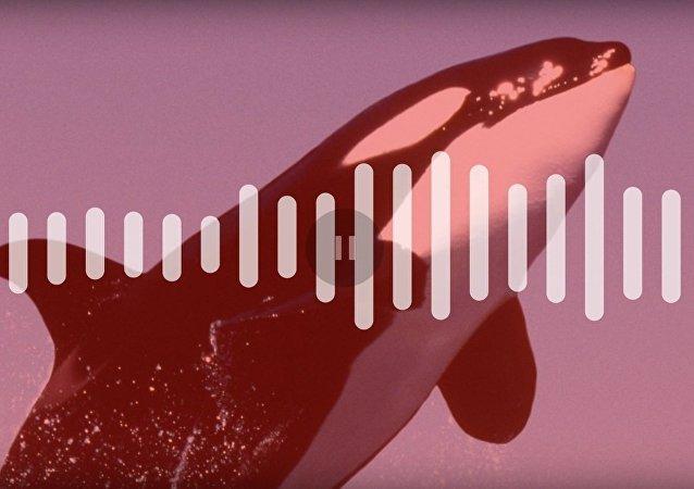 Neuvěřitelné, ale vědci naučili kosatku, napodobovat lidský hlas