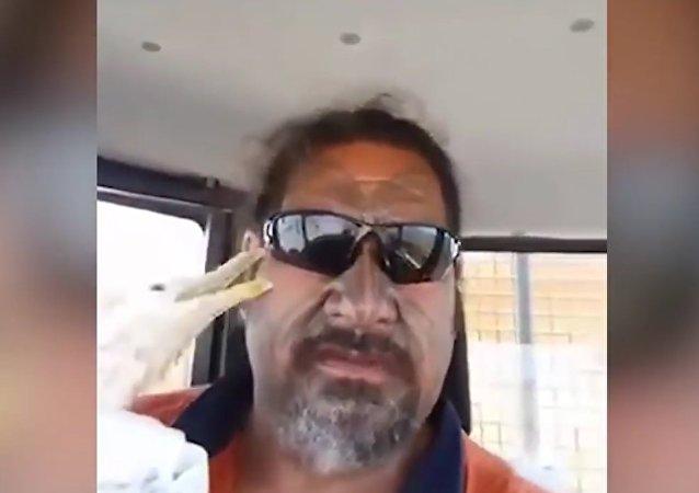 Novozélanďan zachránil racka, který na něj pak zaútočil