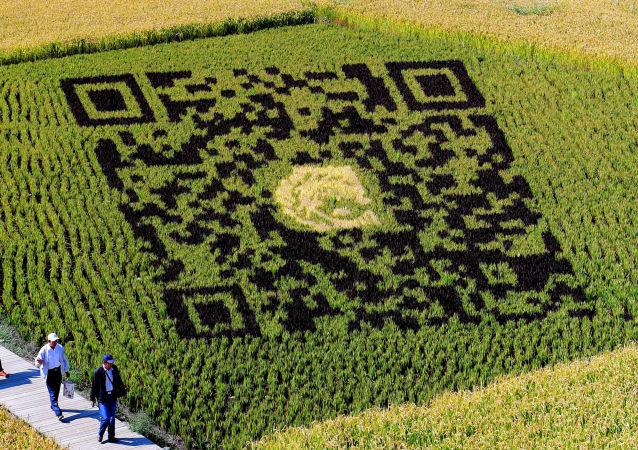 Neobvyklé pole v Číně