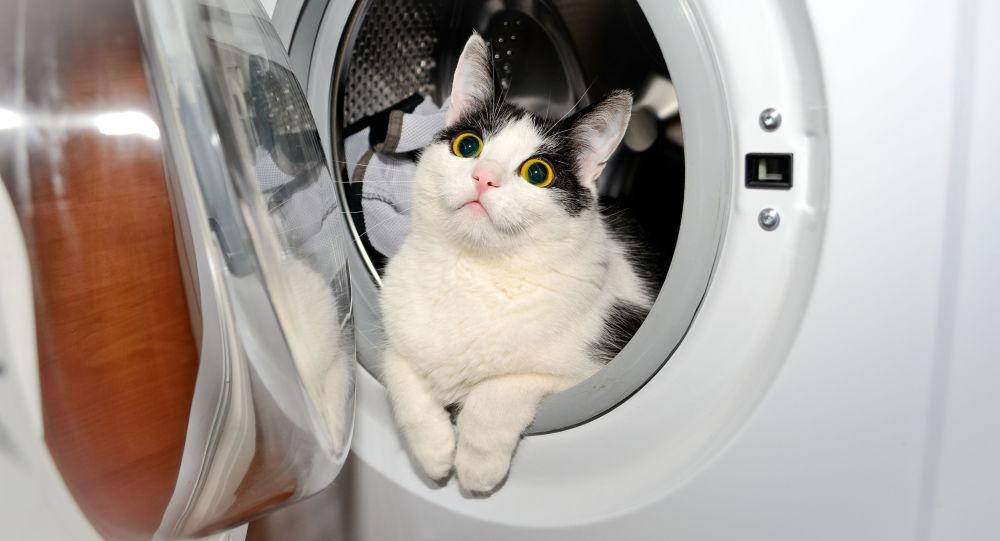 Kocour v pračce, ilustrační foto
