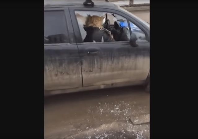Blondýnka rozsekala sekyrou auto před synovýma očima, aby se nedostalo policii