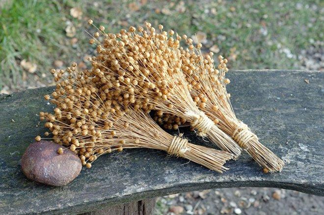 Lněná kukuřice