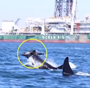 Kosatky a delfín