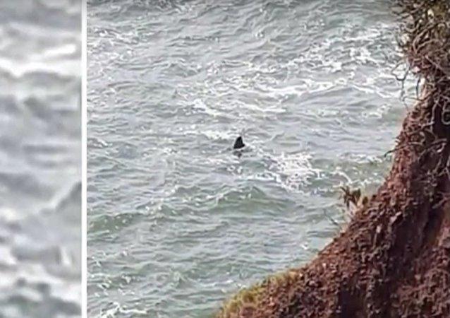 Tajemství obrovského 6metrového žraloka, který byl spatřen na pobřeží Devonu (VIDEO)