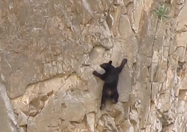"""Medvídci """"horolezci"""" vás naprosto ohromí"""