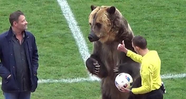 Medvěd na fotbale