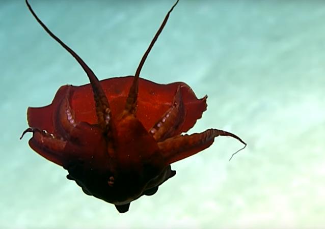 V Mexiku natočili hlubomořského netvora