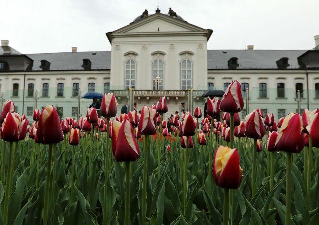 Nizozemsko vyšlechtilo pro SR novou odrůdu tulipánů s názvem Slovensko