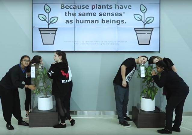 IKEA učí školáky dobru tím, že jim nabízí ponížit rostlinu