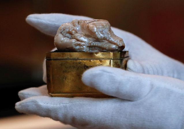 Unikátní perla vážící 118 gramů a měřicí 7 centimetrů