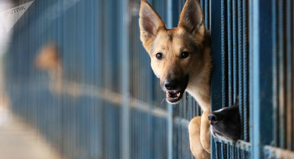 Pes v útulku pro zvířata