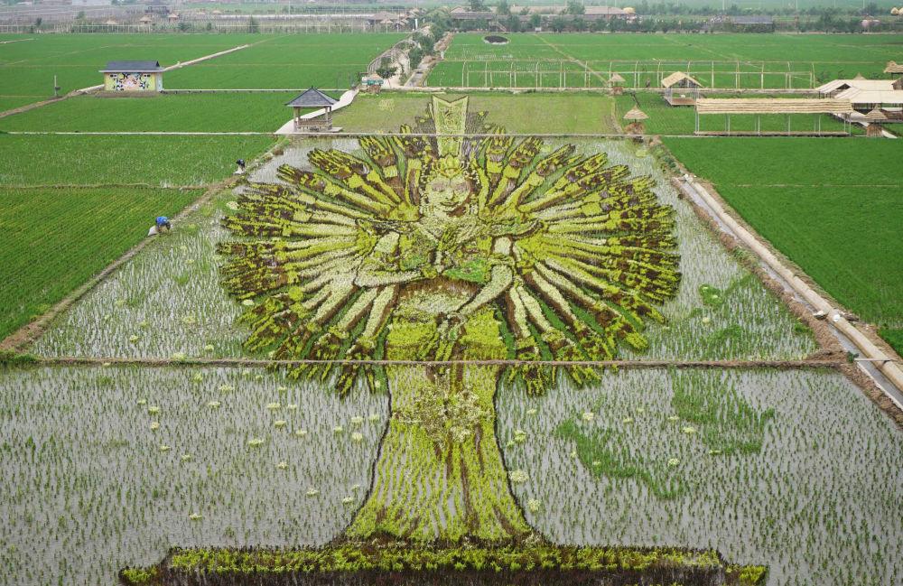 Portrét Bodhisattvy tisíce rukou na rýžovém poli v Číně
