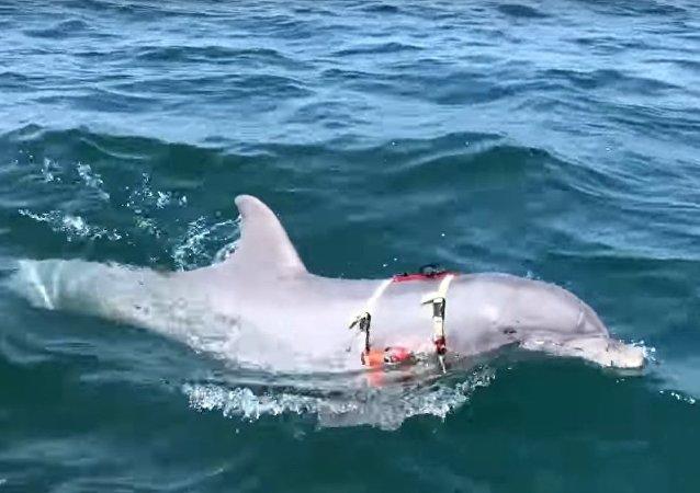 Jak v USA cvičí delfíny pro válku pod vodou