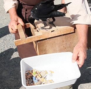 Ve francouzském zábavním parku havrani bojují s odpadky
