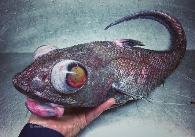Co číhá pod hladinou? Záhadné hlubokomořské potvory vylovené u ruských břehů