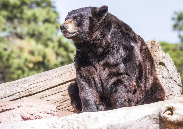 Grizzly. Ilustrační foto
