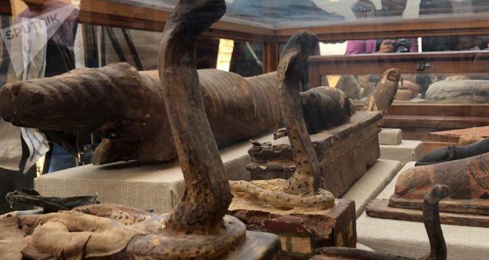 V Egyptě našli hrobky s mumifikovanými zvířaty