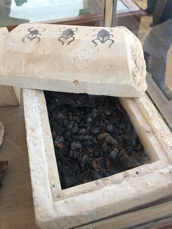 V samostatném sarkofágu byly nalezeny stovky mumifikovaných skarabů