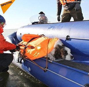 Pes k ledu přimrzl uprostřed jezera. S takovým koncem asi ale nepočítal