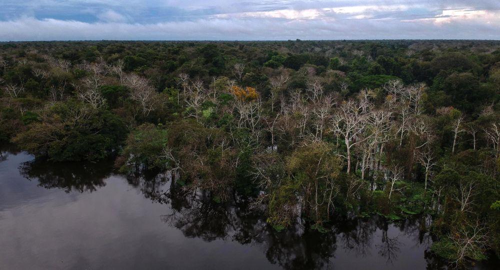 Pohled na les a řeku Jaraua v Brazílii