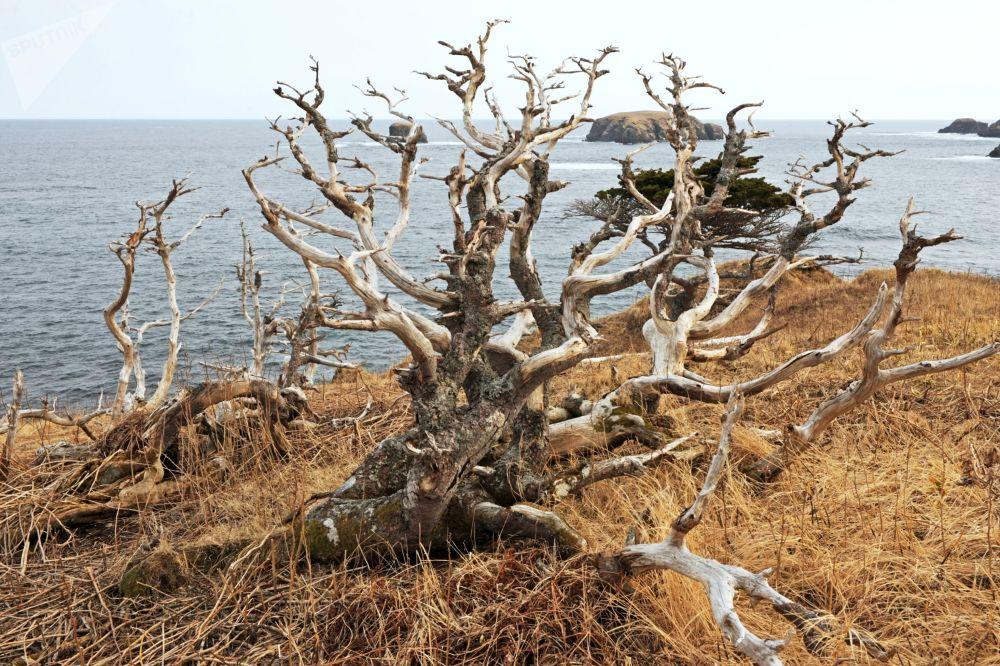 Jablko sváru. Ruský ostrov Šikotan na hranici s Japonskem