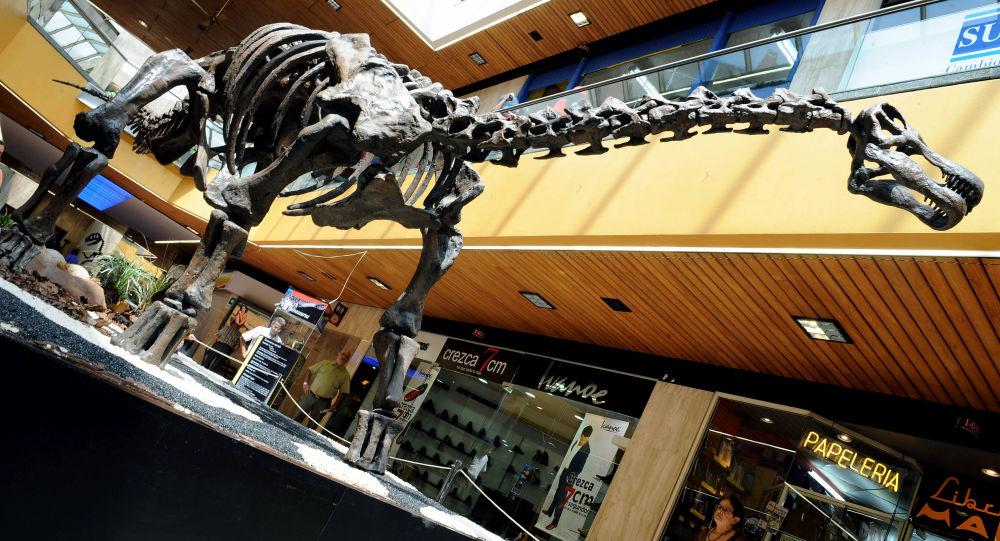 Kostra Titanosaura