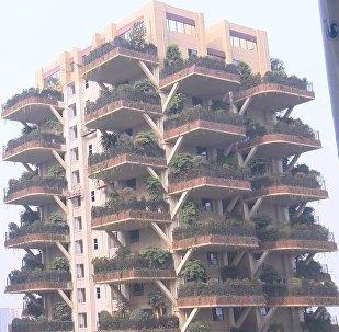 V čínském městě se buduje vertikální les
