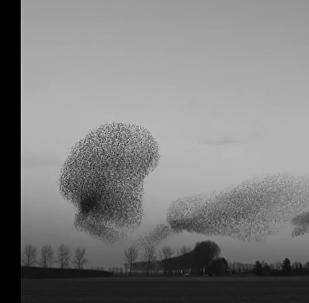 Neskutečná synchronizace ptáků. Proč špačci předvádí na nebi tak jedinečnou choreografii?