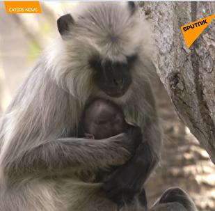 Tato opice přišla o své mládě. Její reakce vám zlomí srdce
